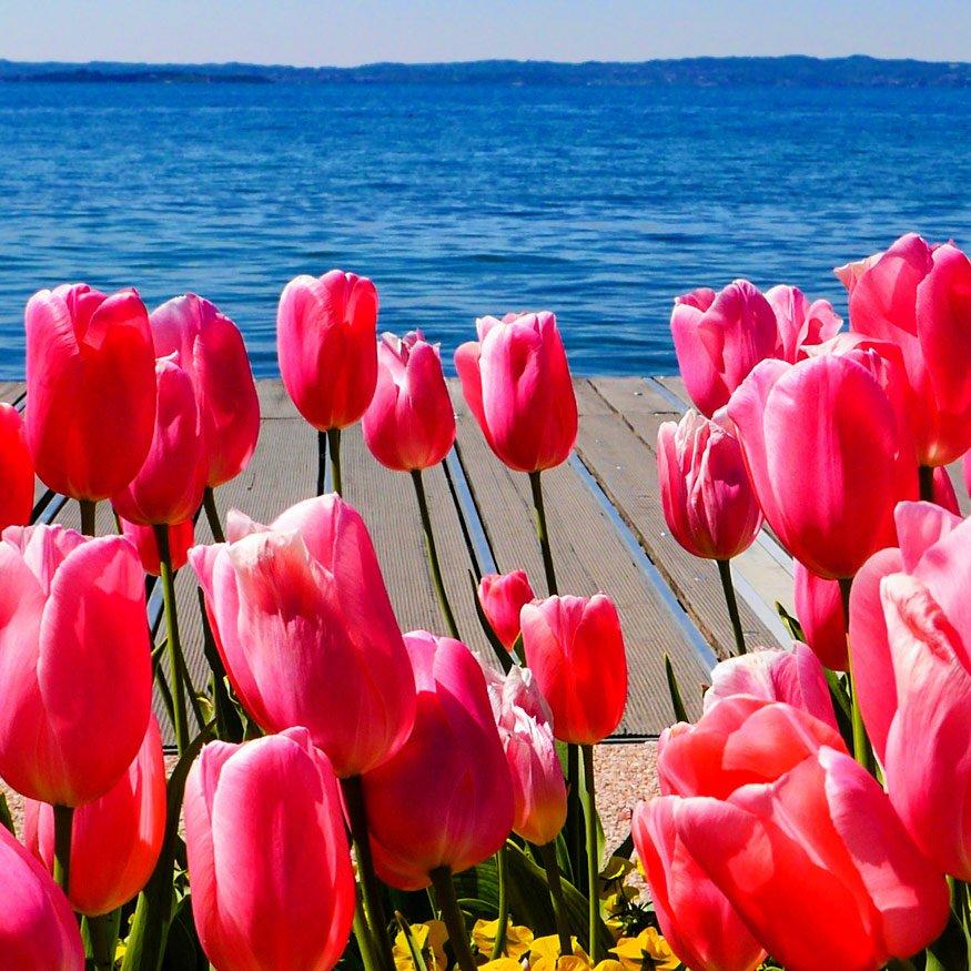 castiglione-del-lago-tulip-festiva